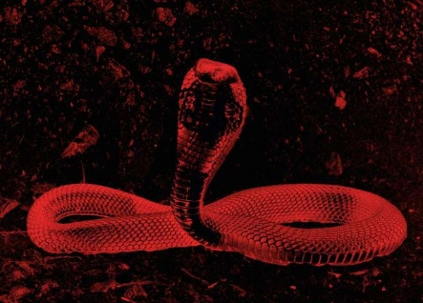 Китайский коронавирус оказался гибридом вирусов змеи и летучей мыши