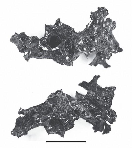 Черная стекловидная масса на месте гибели Помпей оказалась остатками мозга