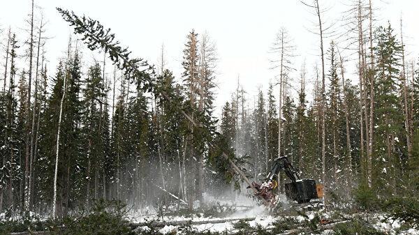 Спутники помогли обнаружить 70% незаконных вырубок леса