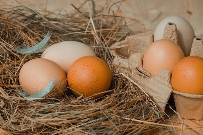 Учёные сообщили, сколько яиц можно есть в день без вреда для здоровья