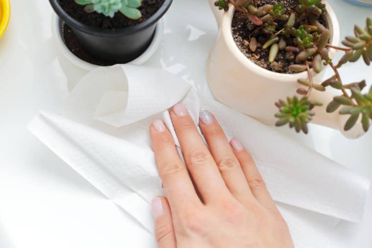 7 вещей, которые вы никогда не должны делать с бумажными полотенцами