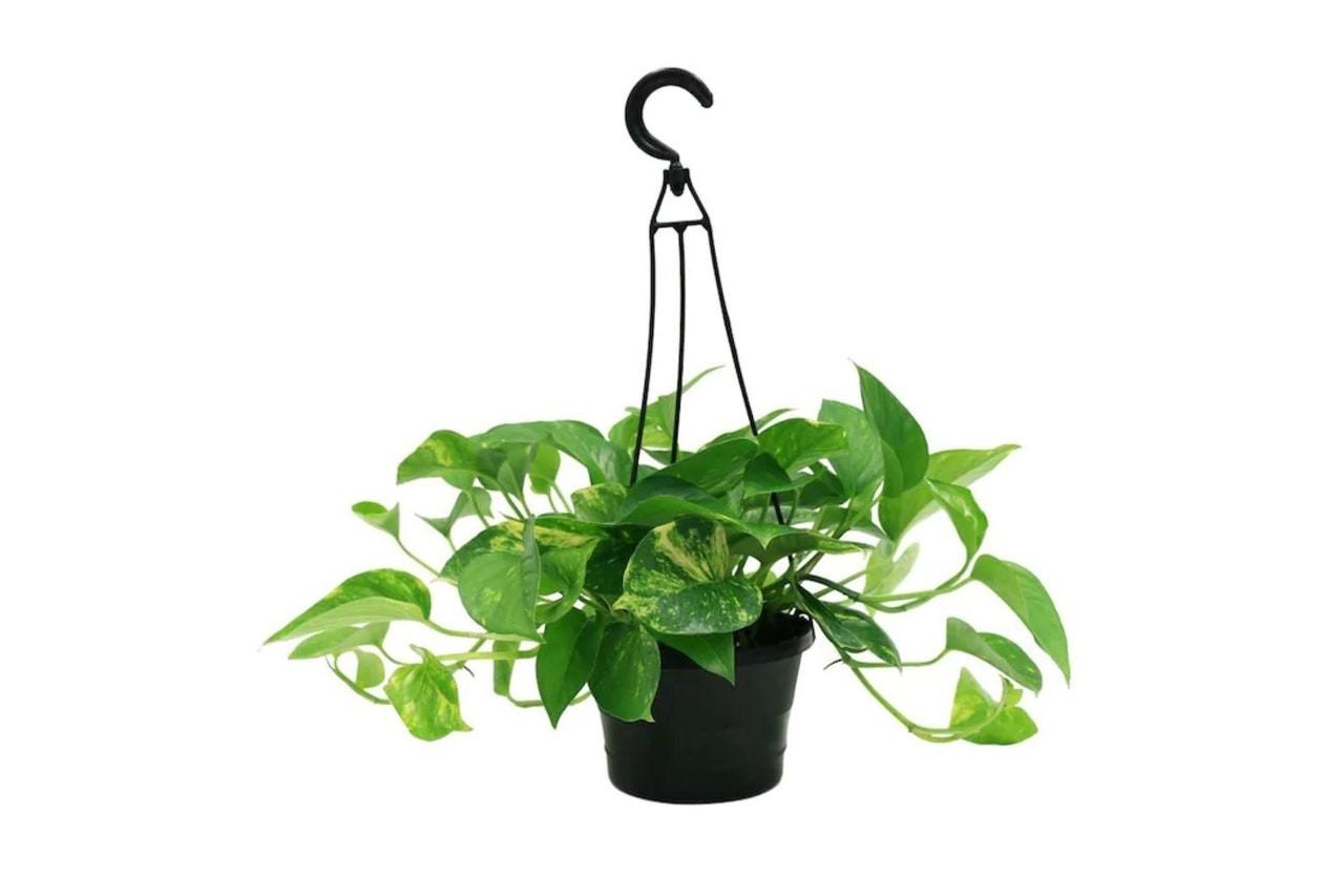 Лучшие комнатные растения, которые очень сложно убить