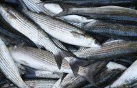 Какая рыба самая полезная для здоровья?