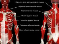 Как исправить круглые плечи: гид по коррекции осанки
