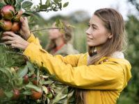Полезные свойства яблок: все о главном диетическом фрукте