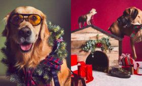 В праздничной кампании Tod's снялись собаки