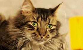 Француз оставил наследство котам Эрмитажа