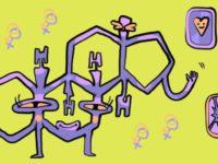 Какие бывают эстрогены и зачем они нужны