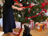 Не совсем маленькое черное платье + алая помада: рождественский образ Натальи Водяновой