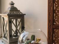 Зимний флорариум своими руками: советы эксперта