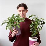 Лучшие растения для спальни: советы по выбору и уходу
