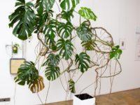 Весна как феномен на выставке в Marina Gisich Projects