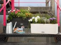 Готовые решения для озеленения балконов и террас