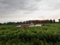 Самый большой зеленый лабиринт в мире